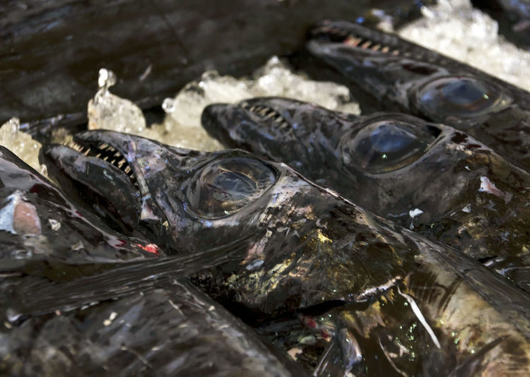 High angle view of fish by crushed ice for sale at market