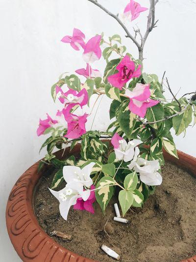 Plants Pink Flowers BeautyAndMadness
