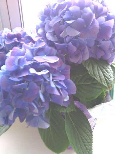 Beautiful Flowers That He Gave Me :)