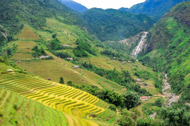 Farm Green Rice Paddy Sapa, Vietnam Scenic Agriculture Beauty In Nature Field Greenery Hmong Horticulture Landscape Landscapes Lush Lush Greenery Mountain Mountain Range Nature Outdoors Rice Paddy Rice Terraces River Sapa Valley Scenics Terraced Field