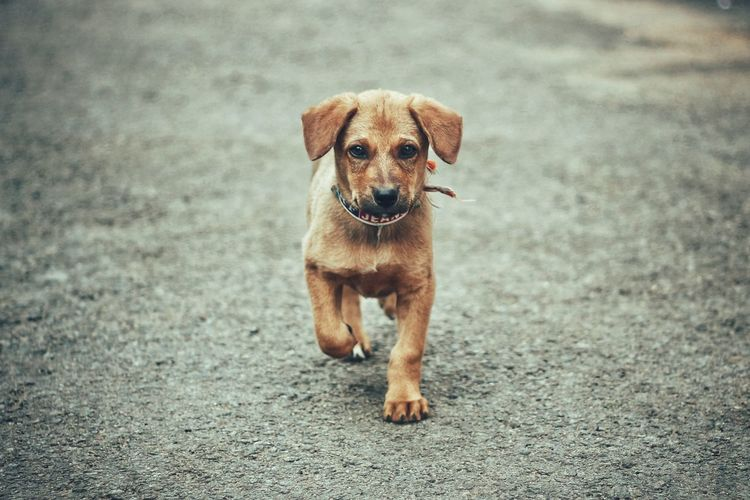 Portrait of puppy on road