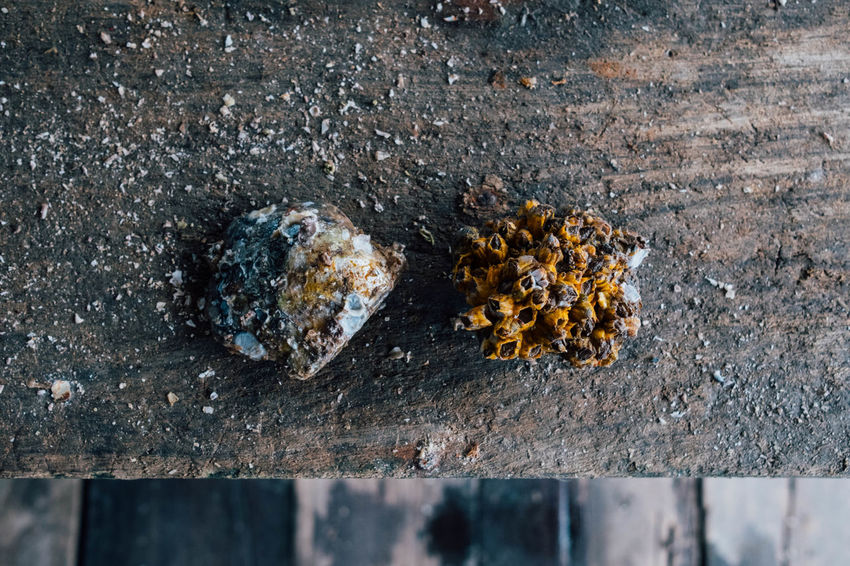At the oyster farm. Farm Seafood Asian Food Beauty In Nature Close-up Day Fragility Fungus Nature No People Outdoors Oyster  Shell
