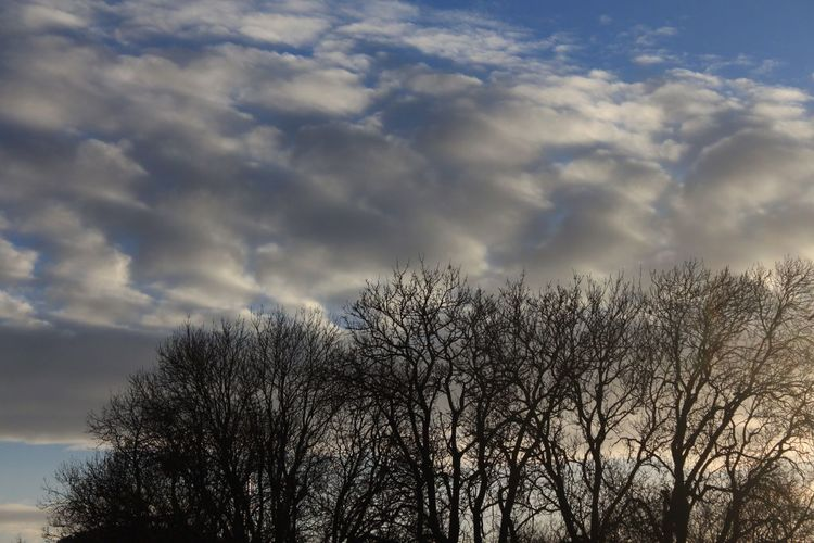 Sky Tree Low Angle View Cloud - Sky Nature Bare Tree No People Beauty In Nature Tranquility Outdoors Branch Growth Scenics Treetop Day