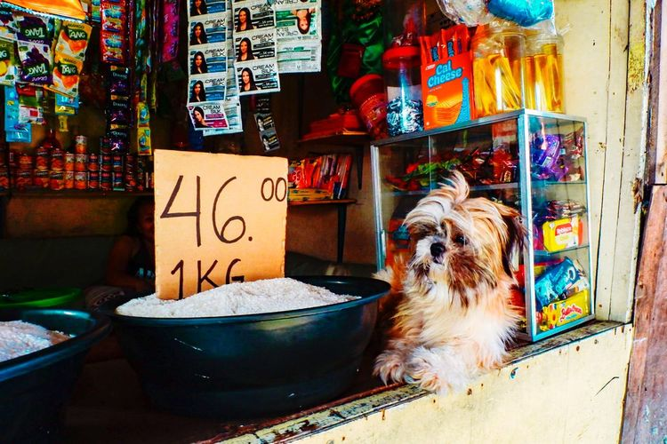 Portrait of a dog in market