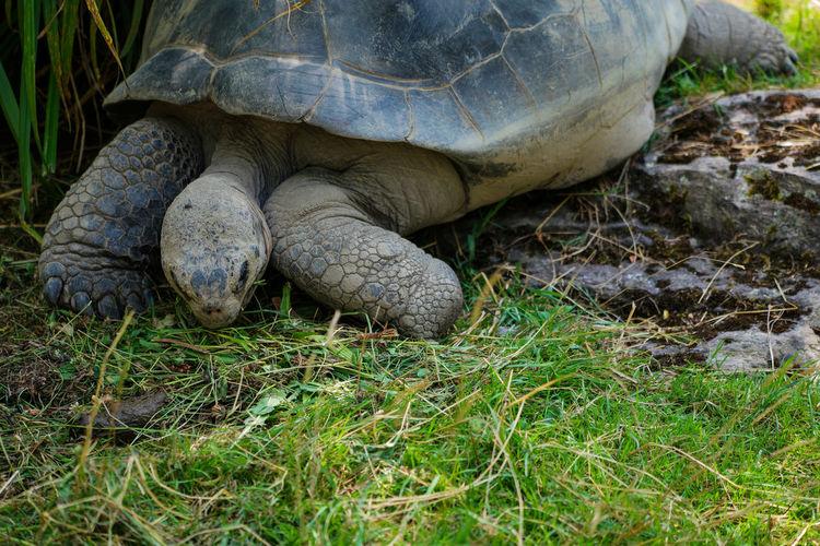 Turtle On Field