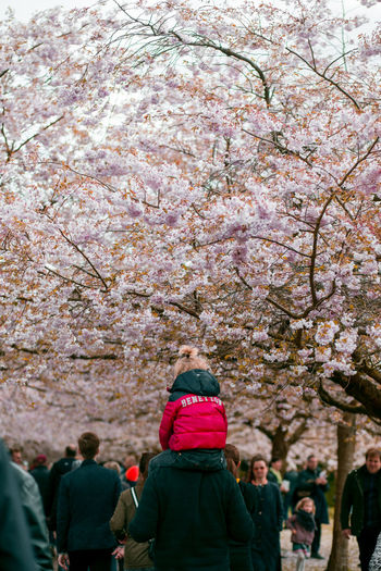 United colours Cherry Blossoms Child On Shoulders Piggyback Trees Father And Daughter Parenthood Childhood Love Family Tree Women Men Rear View Warm Clothing Cherry Blossom Blossom Cherry Tree In Bloom Orchard Blooming Springtime
