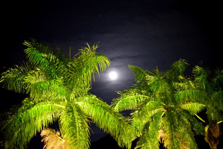 EyeEm Best Shots Eye4photography  Getting Inspired Nightphotography Non-urban Scene My Best Photo Night Plant Moon Green Color Nature Growth No People Tree Beauty In Nature Tropical Climate Sky Palm Tree Leaf Tranquility Moonlight Illuminated Outdoors Plant Part Full Moon Dark Planetary Moon