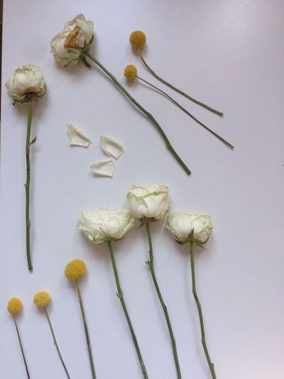 Close-up of flowers over white background