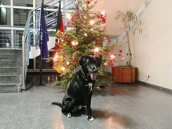 Wachhund Dog Tree NATO One Animal Flags Deutschland Bundeswehr Christmas Tree X-mas