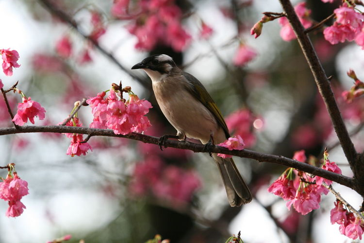 Animal Wildlife Beauty In Nature Bird Nature No People One Animal Outdoors Pink Color