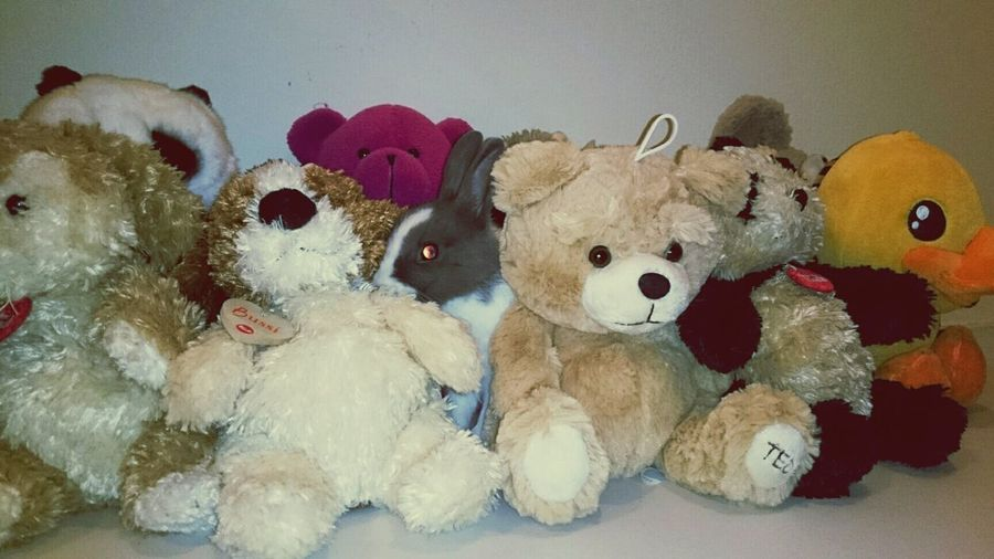 Where are my little rabbit? He talk with my pluch. Rabbit, Peluches, Animals, Lapin