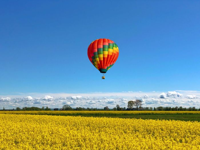 Field Colza Rapeseed Yellow Nature Sky Horizon Blue Balloon Flying Freedom Landscape Environment Mid-air Hot Air Balloon Scenics - Nature Air Vehicle Agriculture Tranquil Scene Transportation Beauty In Nature Rural Scene Crop  Multi Colored Vibrant Color No People Outdoors
