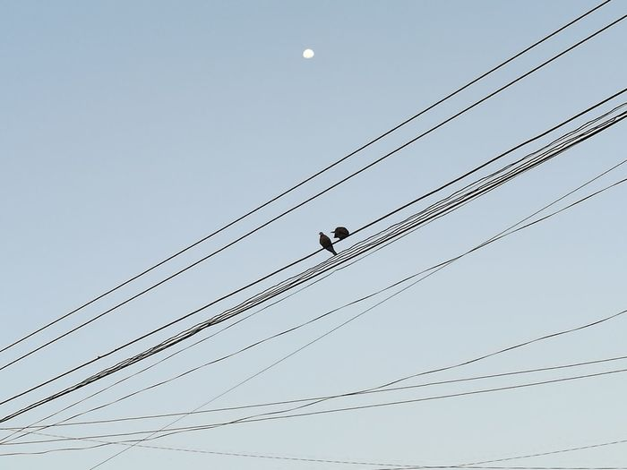 Cable Clear Sky Animals In The Wild Bird Vertebrate Power Supply Animal Themes Animal Wildlife Fuel And Power Generation Connection Low Angle View Electricity Pylon Technology Nature Power Line  Electricity  Animal Sky Complexity One Animal Day Telephone Line Outdoors