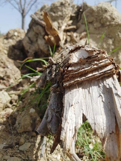 Tree versus Rock Tree Close-up Deforestation Log Fallen Tree Environmental Damage