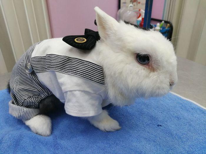 Cute Rabbit ,bunny Rabbit Cute Pets Cute Rabbit Bunny  Veterinarian Animal Hospital Pets Dog Pet Clothing Cute Close-up