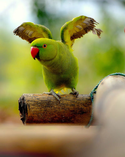 Animal Wildlife Green Color One Animal Animals In The Wild No People Animal Themes Nature Close-up Day Pets Perching Outdoors Mammal UnderSea