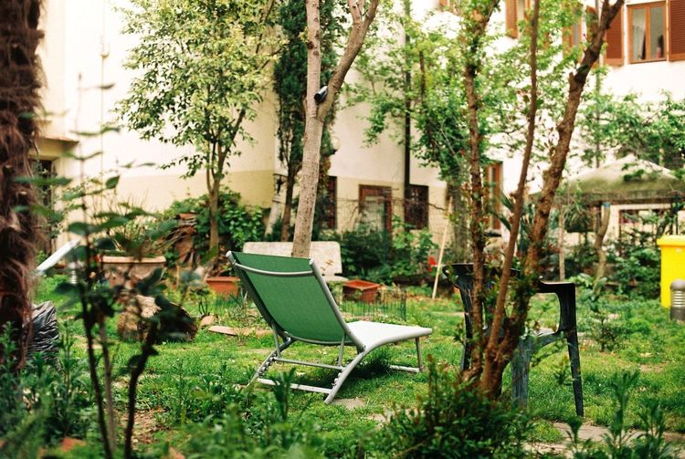 Chairs in yard
