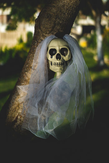 Skull bride at back yard. Backyard Dark Ghost Grass Halloween Holiday Skeleton Skull Bride Backgrounds Bone  Bride Celebration Communication Costumes darkness and light Day Evil Fear Focus On Foreground Ghost Halloween Headshot Horror Human Body Part Human Bone Human Representation Human Skeleton Human Skull Outdoors Skeleton Skull Spooky Toy Tree White Yard
