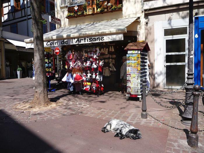 France May 2008 Shop Dog Relaxing Enjoying Life