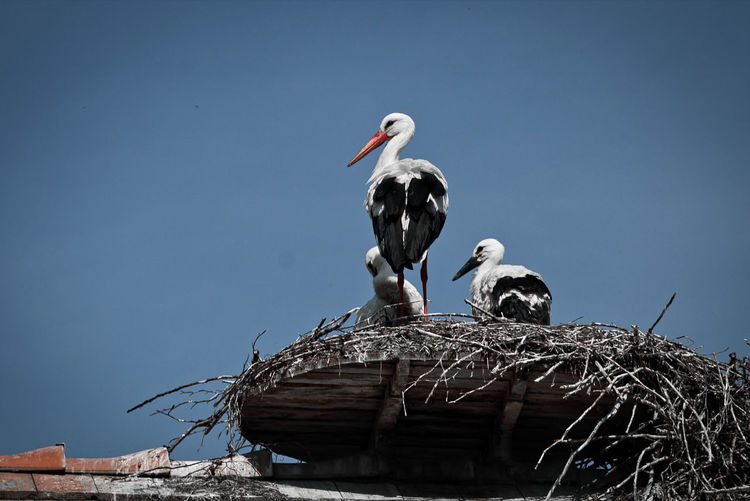 Low angle view of birds in nest against clear sky