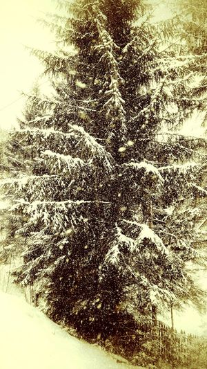 Editing...Abstract Backgrounds No People Refreshment Close-up Water Indoors  Nature Day Falling Falling Snowflake Pinetrees Edited My Way Pinetrees🌲 Cold Temperature Winter Wonderland Falling Snowwwwwww ❄❄❄❄❄❄❄❄❄❄❄❄❄ Tree Nature Retro Retro Styled Falling Snow Falling Snowflakes Outdoors Artistic Eye