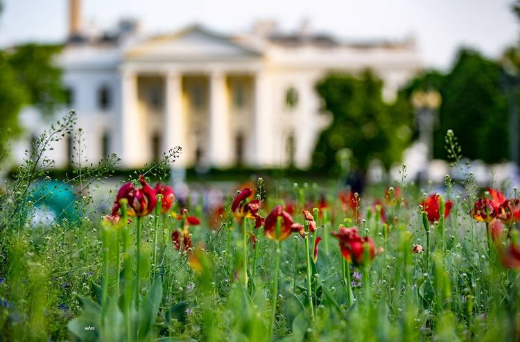 The Most Beautiful of the Whitehouse Photography Photooftheday Bestoftheday EyeEm Best Shots Architecture City Plant Flower Flowering Plant Growth Freshness Fragility Architecture Beauty In Nature Nature