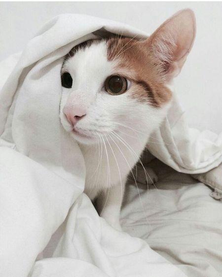 Things I Like Cat Lovers Animalsaddict Animalslover Whiteandorange