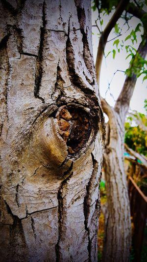 Lunar forestal EyeEmNewHere EyeEm Best Shots EyeEm Selects EyeEm Gallery EyeEmBestPics Eyemphotography Amecameca Amecameca De Juarez Amecameca De Juárez. Estadodemexico Estado De México Victormcastelan Víctor Castelán Ramas🌿 Ramas De Arboles Arboles árbol Nogal Nogales Nuez Nuez De Castilla Tree Statue Sculpture Tree Trunk Art And Craft Close-up Sky Carving - Craft Product Historic