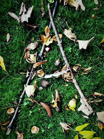 This Is Autumn day 27. A Is For... Autumn Things On The Ground Grass Twigs Leaves Conquers Nature Feather  Beauty In Nature