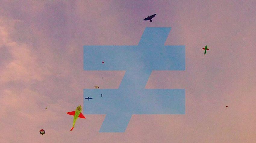 FAUVE Fauve Paysage Birds Music