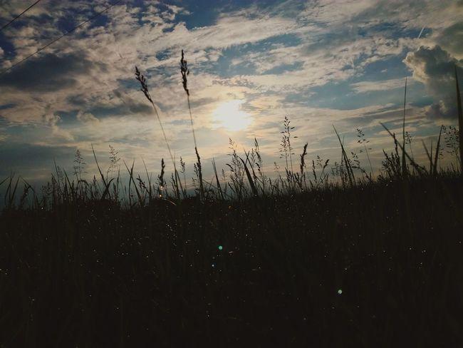 🌤 Sunset Nature Summer Sun Grass Outdoors Alone Sky
