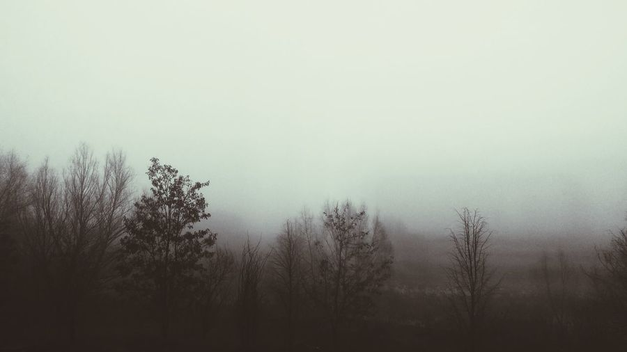 Silent Fog Alone Time Darkness And Light Gothic Trees