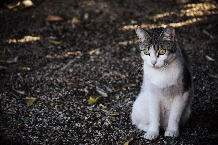 Close-Up Of Domestic Cat Sitting On Field