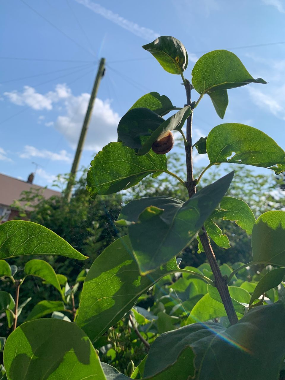 leaf, plant part, plant, growth, green color, nature, beauty in nature, no people, close-up, day, low angle view, tree, sky, freshness, focus on foreground, outdoors, food, fruit, food and drink, healthy eating