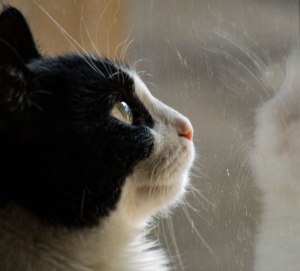 Focus On Foreground Animal Themes Cat Cat Lovers Feline Feline Portraits Feline Eyes Cat Portrait Window Gaze Daydreaming