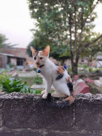 Cat looking away on retaining wall
