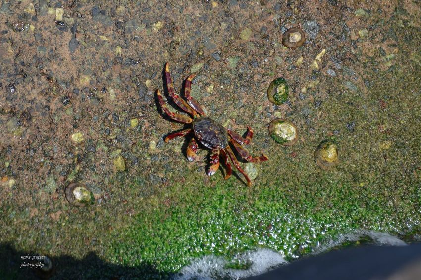 Crabs eating Animal Wildlife Animal Themes Animal Animals In The Wild One Animal High Angle View Invertebrate No People Water Land Nature