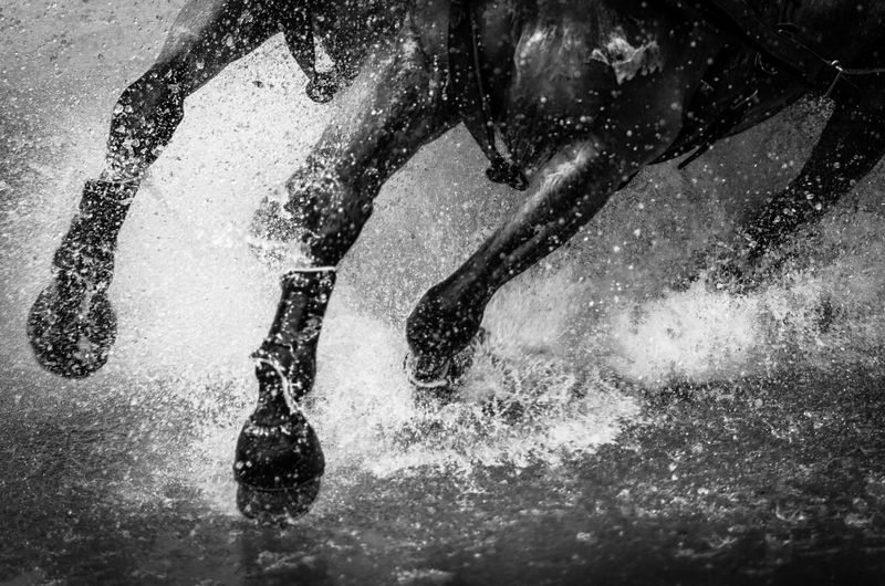 Close-Up Of Horse Running In Water