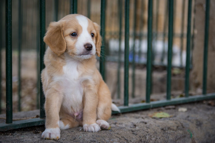 Puppy model Animal Themes Close-up Dog Domestic Animals Mammal No People One Animal Outdoors Pets Puppy Purebred Dog Sitting