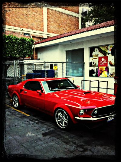 Ford Mustang Red Colection