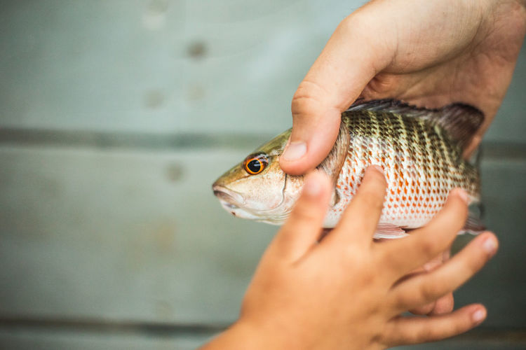 Cropped Hand Of Child Touching Fish Held By Person