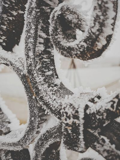 Winter Snow Tree Cold Temperature Snowflake Close-up Christmas Nature Outdoors Day No People Branch Beauty In Nature Snowing Trees Winter Shootermag_france Freezing ❄ Freshness Shootermag Rusty Metal Castle Minimalism Colour Of Life Vaux Le Vicomte