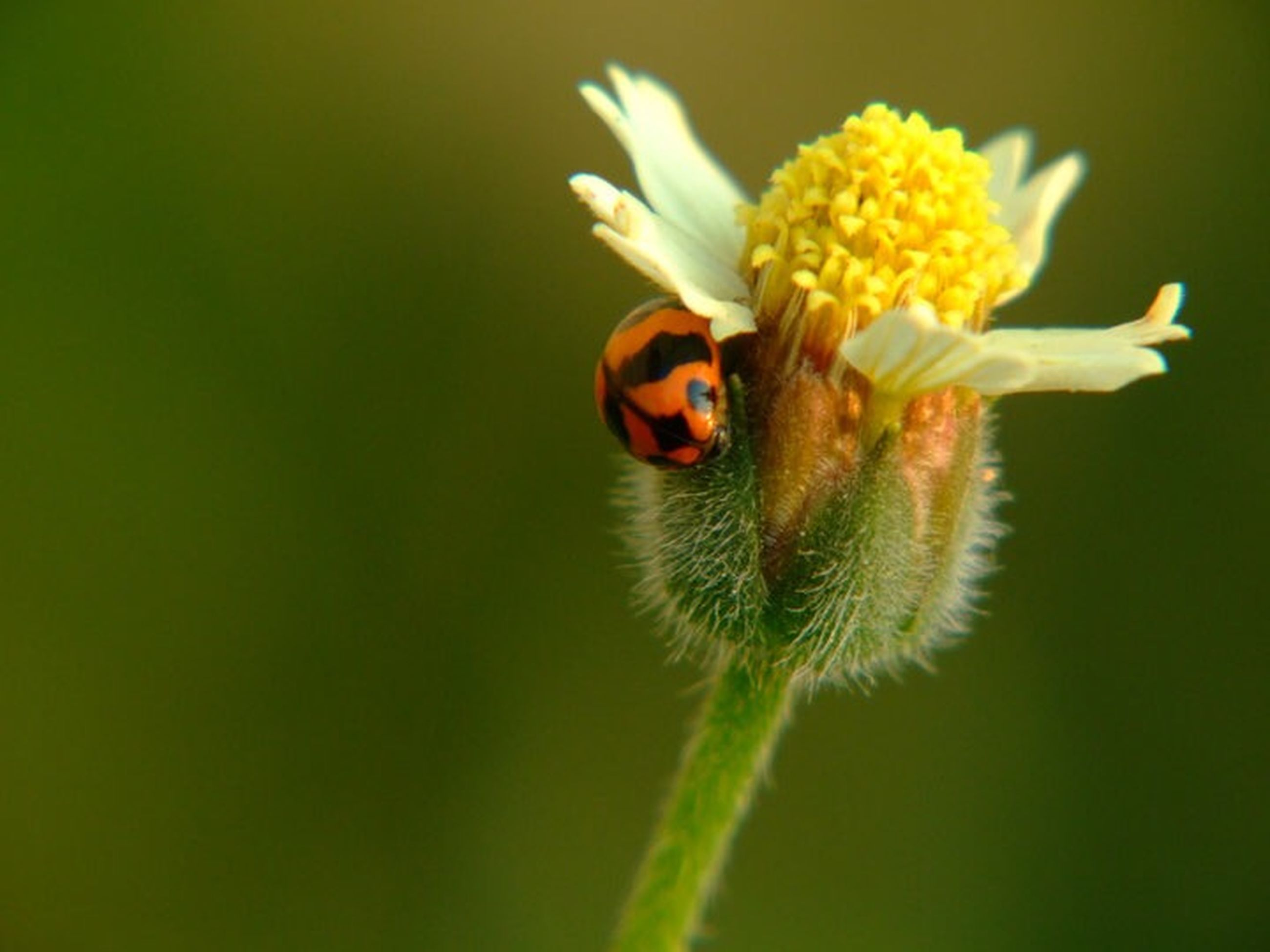 flower, freshness, fragility, petal, flower head, focus on foreground, growth, close-up, beauty in nature, nature, one animal, animal themes, plant, yellow, stem, blooming, wildlife, insect, selective focus, animals in the wild