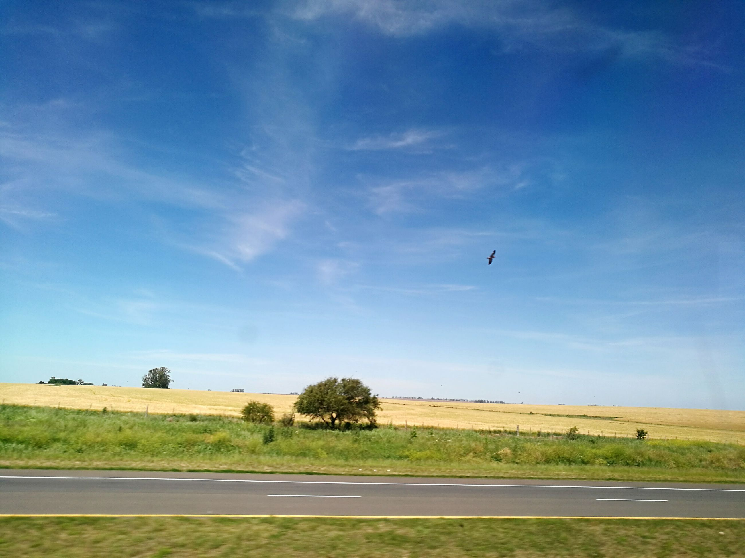 flying, bird, sky, no people, outdoors, tree, one animal, nature, cloud - sky, day