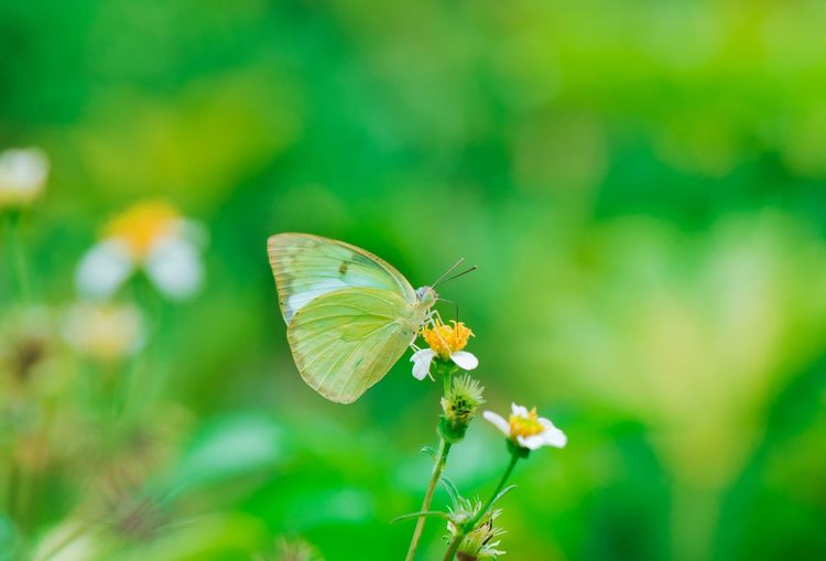 EyeEm Selects Insect Animal Wildlife Invertebrate Animal Themes Flower Animal Plant Animal Wing Beauty In Nature Animals In The Wild Flowering Plant Butterfly - Insect Nature