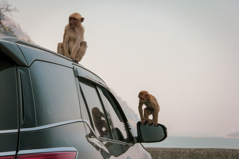 The planet of the apes 🐒🐵 Play Fun EyeEmNewHere EyeEm Gallery Reflection Looking Couple Looking For Food Day Daylight Dam Parking Sky Water Animal Animals Animal Photography Naughty Monkey Naughtily Mischievious Treval Mountain Baboon Sitting Pets Adventure Sky Travel Ocean Safari