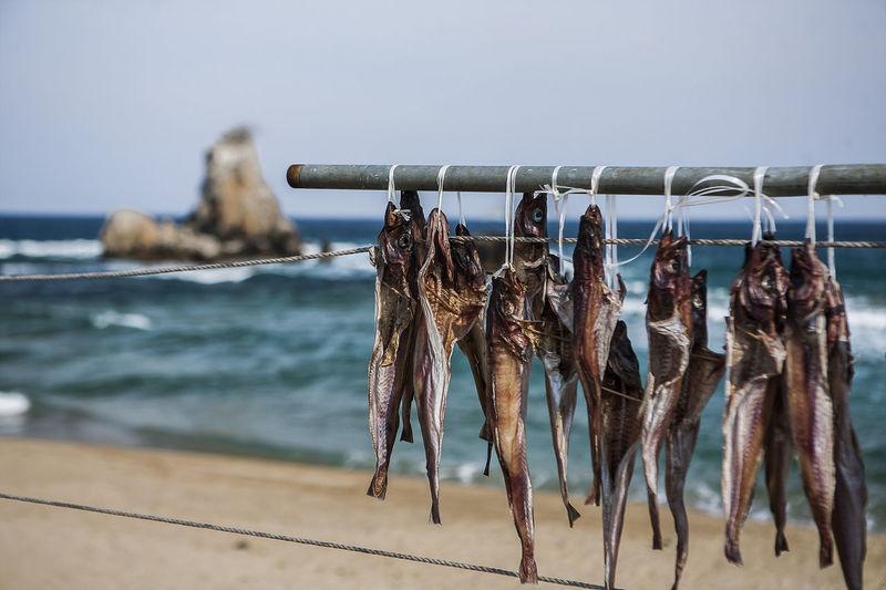 Close-Up Of Dry Fish Hanging At Beach