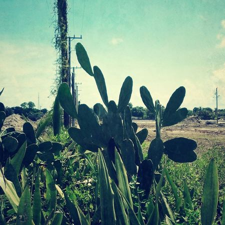 Nature Photography nature outdoors plants ftlauderdale Browardcounty