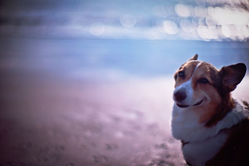 Dog standing at beach on sunny day