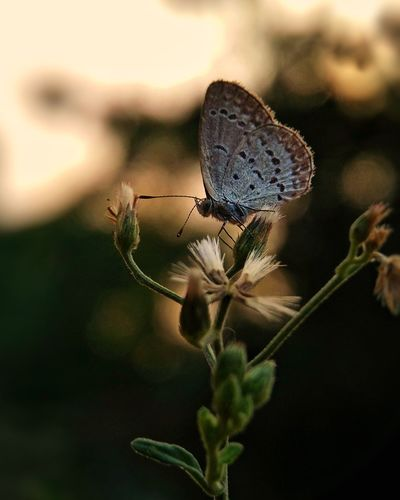 Insect Focus On Foreground Animals In The Wild Animal Wildlife Nature Spider Web Close-up No People Social Issues Animal Themes Butterfly - Insect One Animal Plant Fragility Outdoors Day Freshness